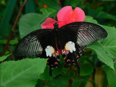 Imagini Filipine: fluturi in Bohol