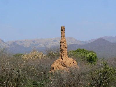Obiective turistice Etiopia: valea Omo, musuroi de termite