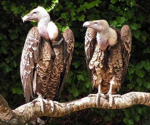 From Perak With Love Jenis Jenis Burung Paling Berbahaya Di Dunia