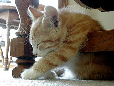 kucing, kucing cantik, kucing penat, kepenatan, sajak aku kepenatan,