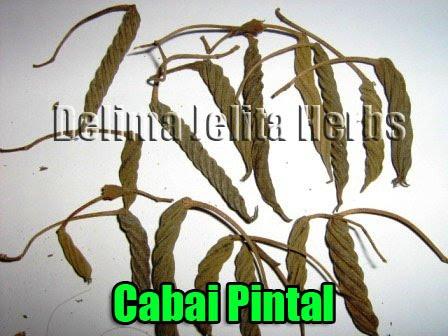 CABAI PINTAL