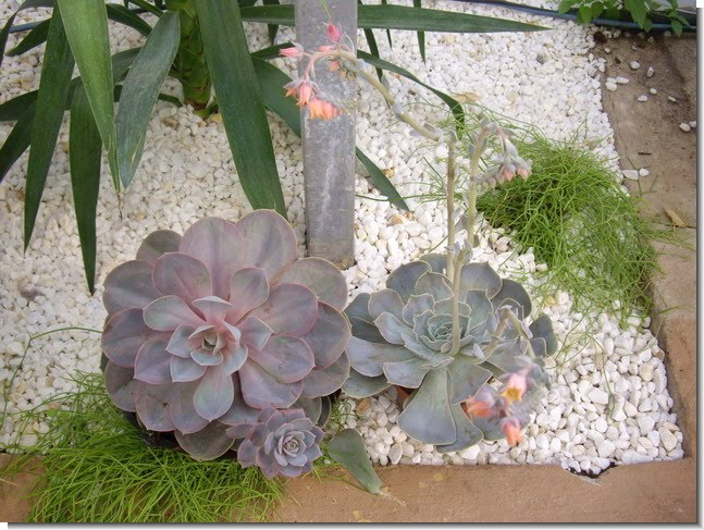 Jardines y terrazas guijarros y piedras decorativas for Diseno de piedras decorativas