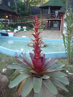 Bela flor no Shopping Vale dos Duendes, Penedo