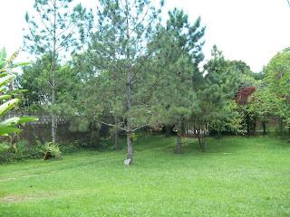 gramado em Penedo, RJ
