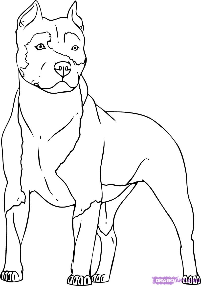 Pit Bull Coloring Pages #2