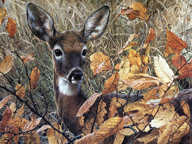 Fall Whitetail Deer Hunting