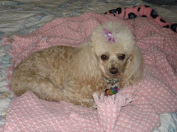 In Memory of Tammy Lou 1998-2010