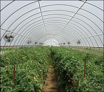 Anim Agriculture Technology: Greenhouse Technology