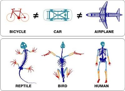evolution planet common design doesn t explain homologous structures