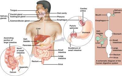 Abdominal Pain RightLeft Upper Quadrant