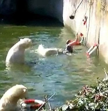 Brunei Delights And Liverpool Fan Polar Bear Attack Woman