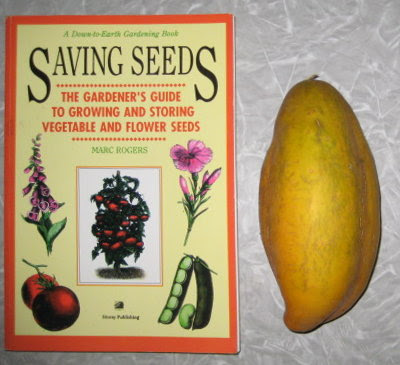 Very ripe cucumber & my seed saving resource.