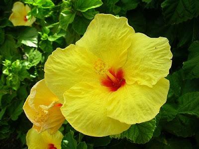 Blossom Like A Flower Power