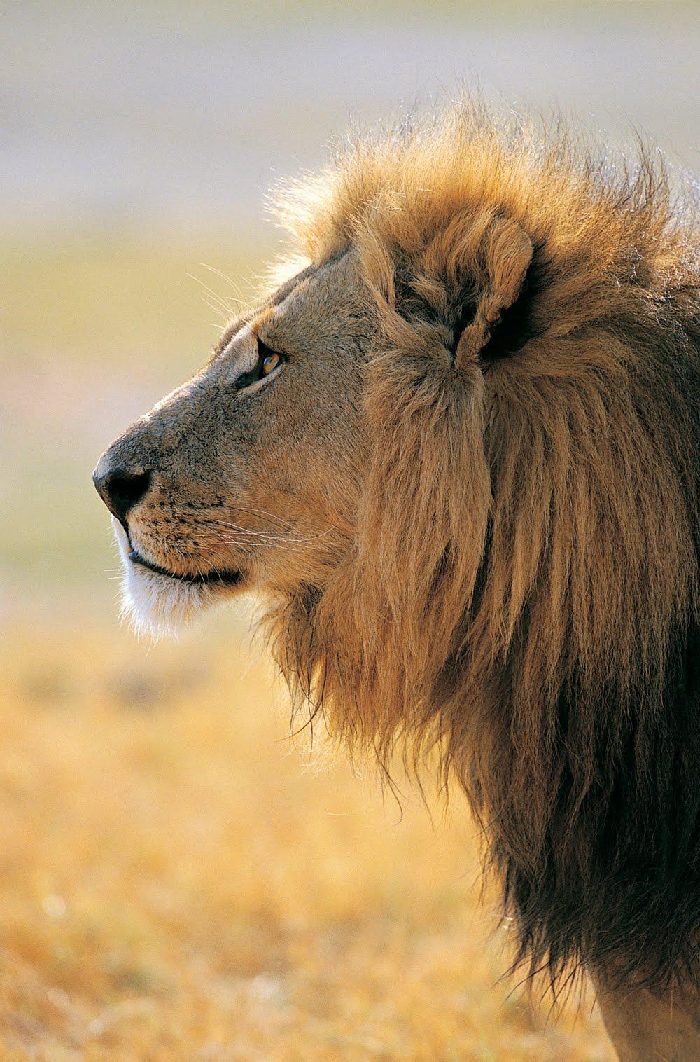 Fotografias De Stock Samiramay: BANCO DE IMÁGENES: Animales Salvajes (16 Fotografías En