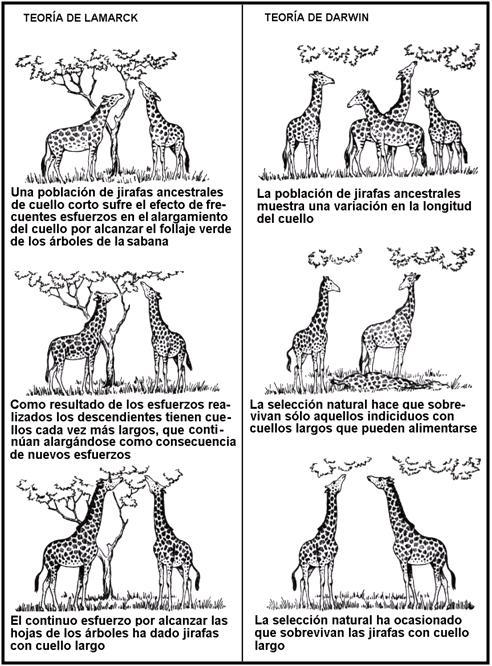 Resultado de imagen de Lamarck Darwin