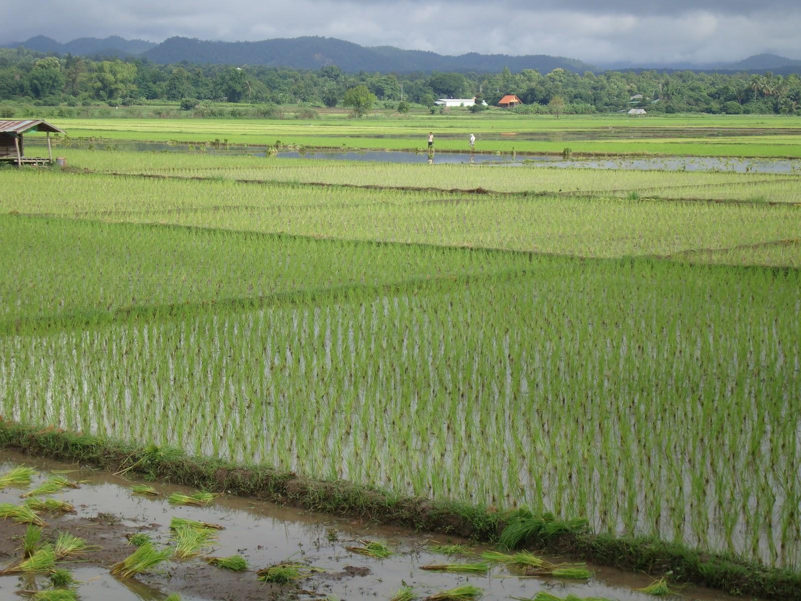 Waiting on the Rainy Season: An ECHO Asia Blog: My ...  Waiting on the ...
