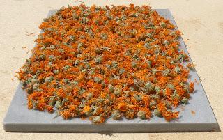 flores de calendula secando