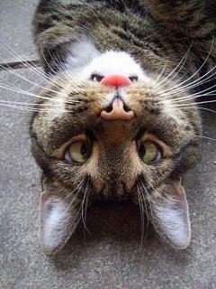 optical illusions find cat # 55