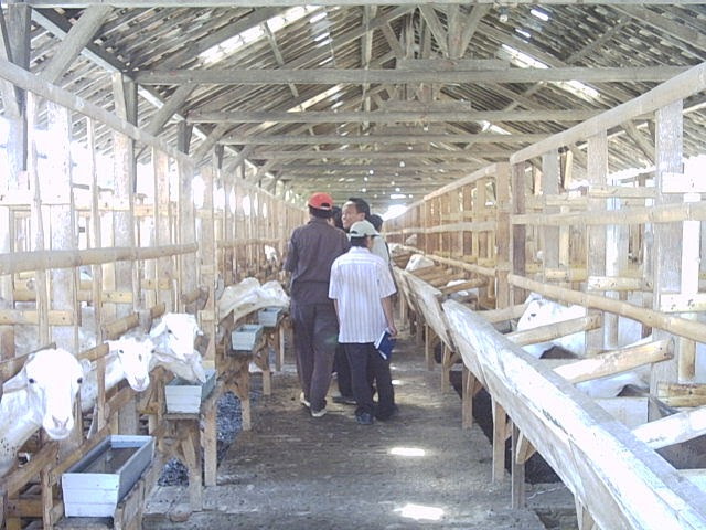 Masalah ternak kambing