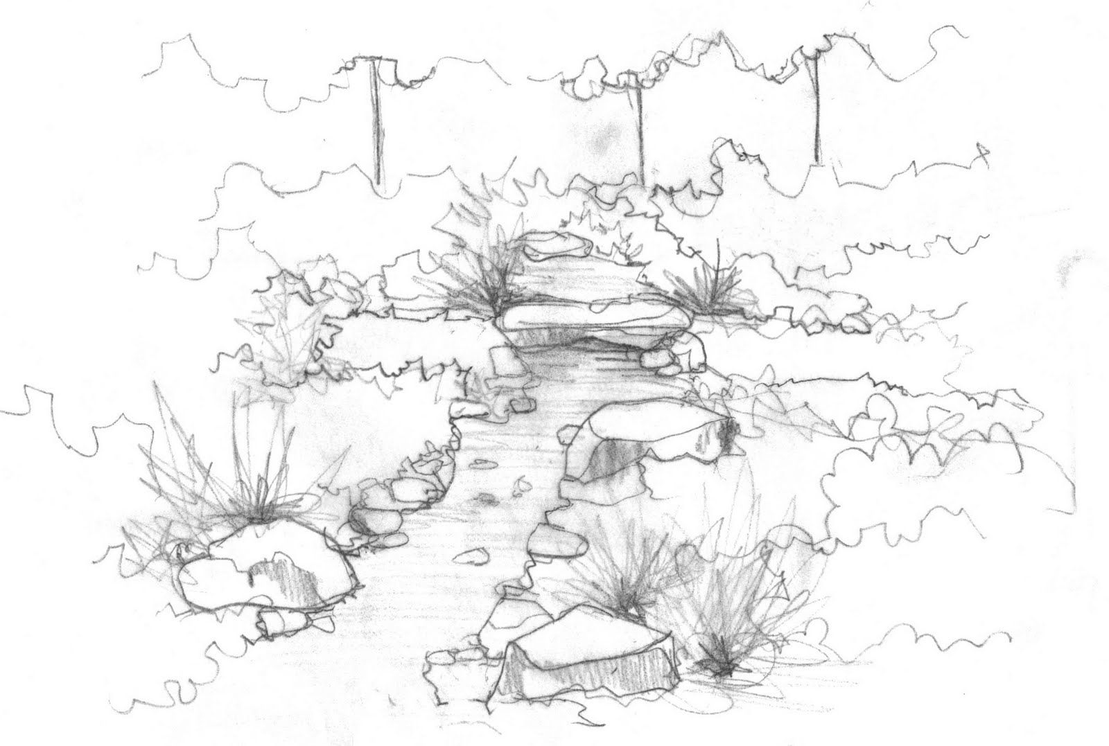 Drought Tolerant Dry Creek Bed Sketch Coloring Page