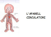 http://www.slideshare.net/lacovadelacova/l-aparell-circulatori