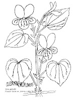 Homeschool Nature Study and More ~: Botany Coloring Pages