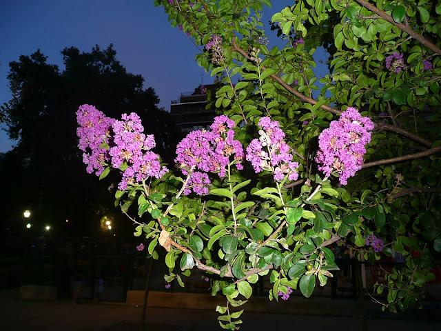 Flores en rama de árbol.