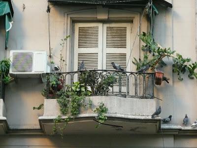 Palomas en un balcón