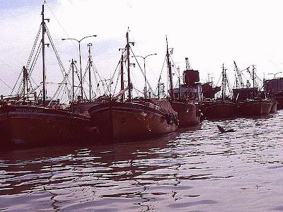 Lobo marino nadando hacia barcos en puerto de Mar del Plata.
