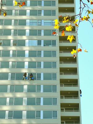 Dos lavadores de vidrios en altura tras las hojas de los árboles
