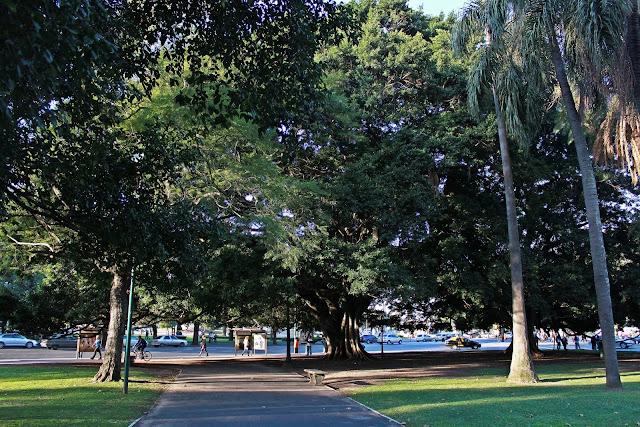 Árboles en el parque y un sendero a la avenida