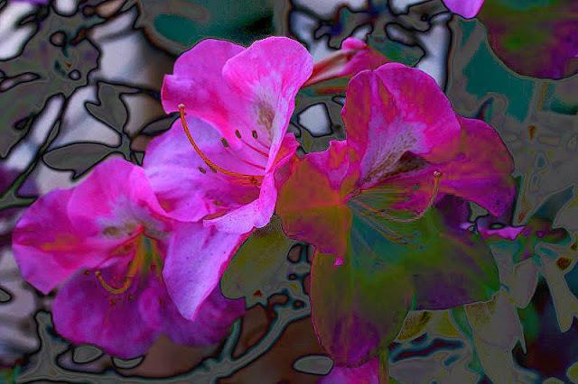 Flores de azalea.