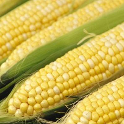 Zöldségek - Gyümölcsök: Kukorica