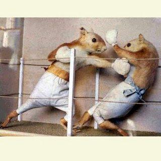 IMAGE(http://2.bp.blogspot.com/_FdpBYTH6CL8/Sg6lRYaspQI/AAAAAAAABPQ/WRoNhmJg0i0/s320/boxingsquirrels.jpg)