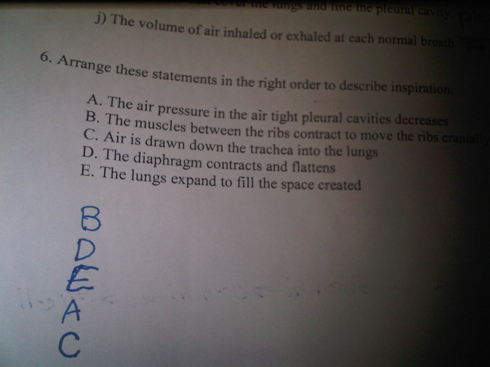 Khalid Science Respiratory System Worksheet