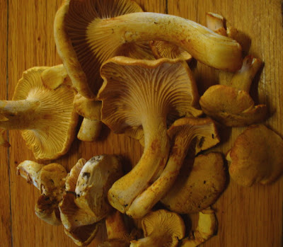 chanterelle wild mushrooms