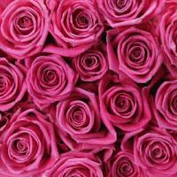 rožinės rožės, rožinis grožis
