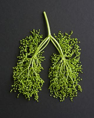 Esculturas de comida por Sarah Illenberger 28