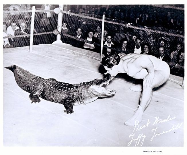 Alligator Wrangler