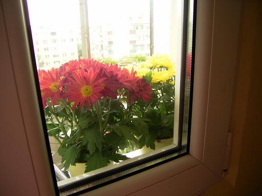 flori balcon