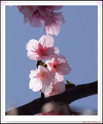 花卉: 各式花語