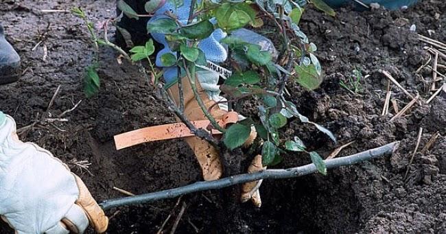 mon arbre le de vivre le douaire quel emplacement o et comment planter un arbre un. Black Bedroom Furniture Sets. Home Design Ideas