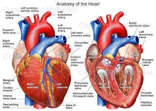 Hipertensión postural triple torbellino