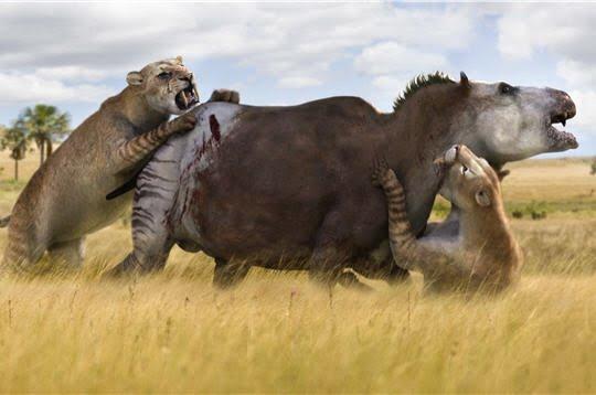 Resultado de imagen para leones y tigres persiguiendo a venados