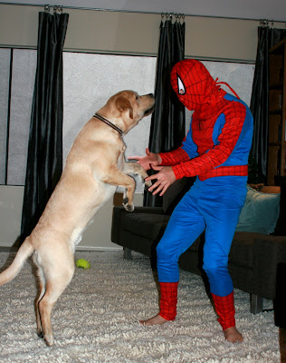 Halloween Spider-man & his faithful sidekick Cooper