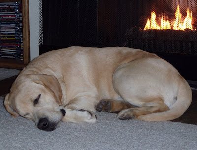 Curled up by the fire after a Runyon Canyon walk