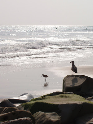 Seagull on Santa Monica beach
