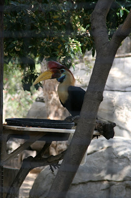 Toucan bird at LA Zoo