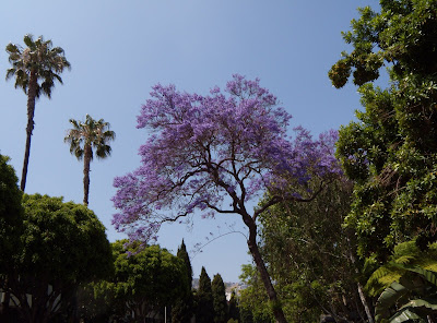 West Hollywood trees in bloom
