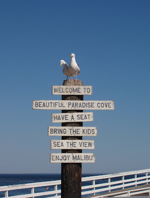 Seagull welcome to Paradise Cove in Malibu